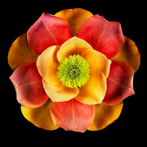 rose_petals